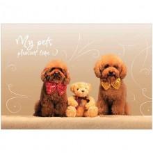 Альбом А4 20л. на скрепке обложка картон красочный арт.20-1211,20-6093